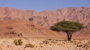 zicht op bergen en een boom