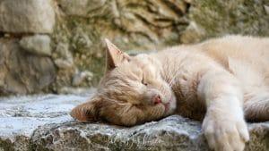 slapende poes